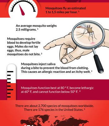 Ortho Pest Control Mosquito Facts Infographic
