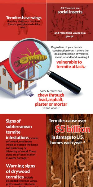Ortho Pest Control Termite Facts Infographic