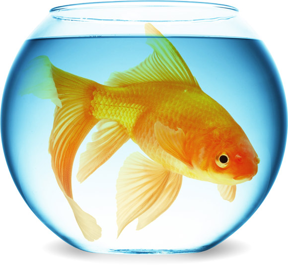 Big Fish Small Bowl Business Outgrown Website