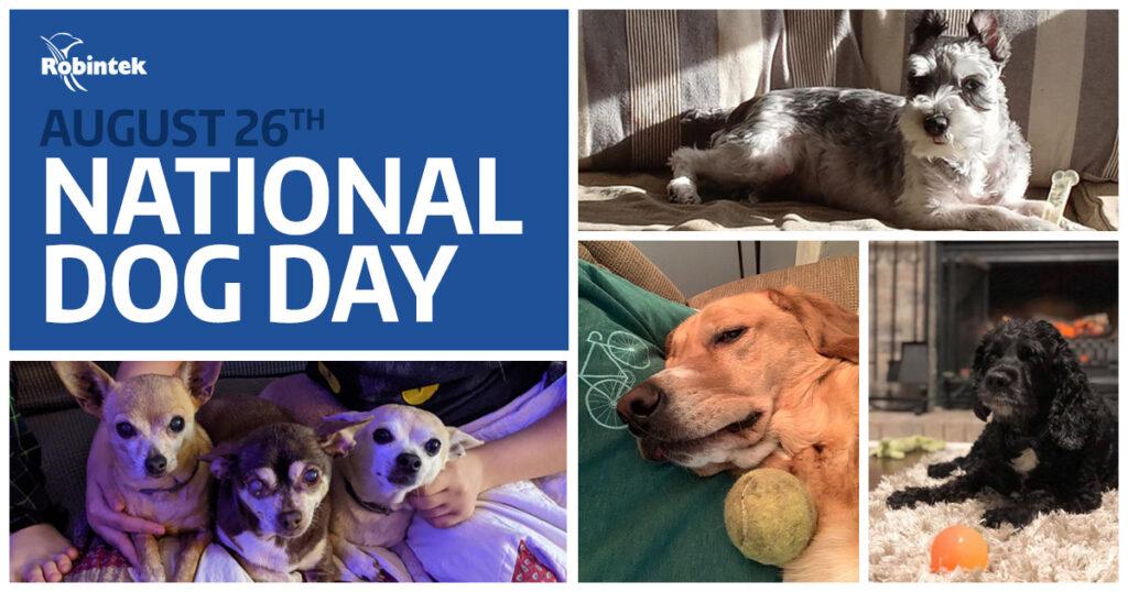 National Dog Day at Robintek Columbus Web Design